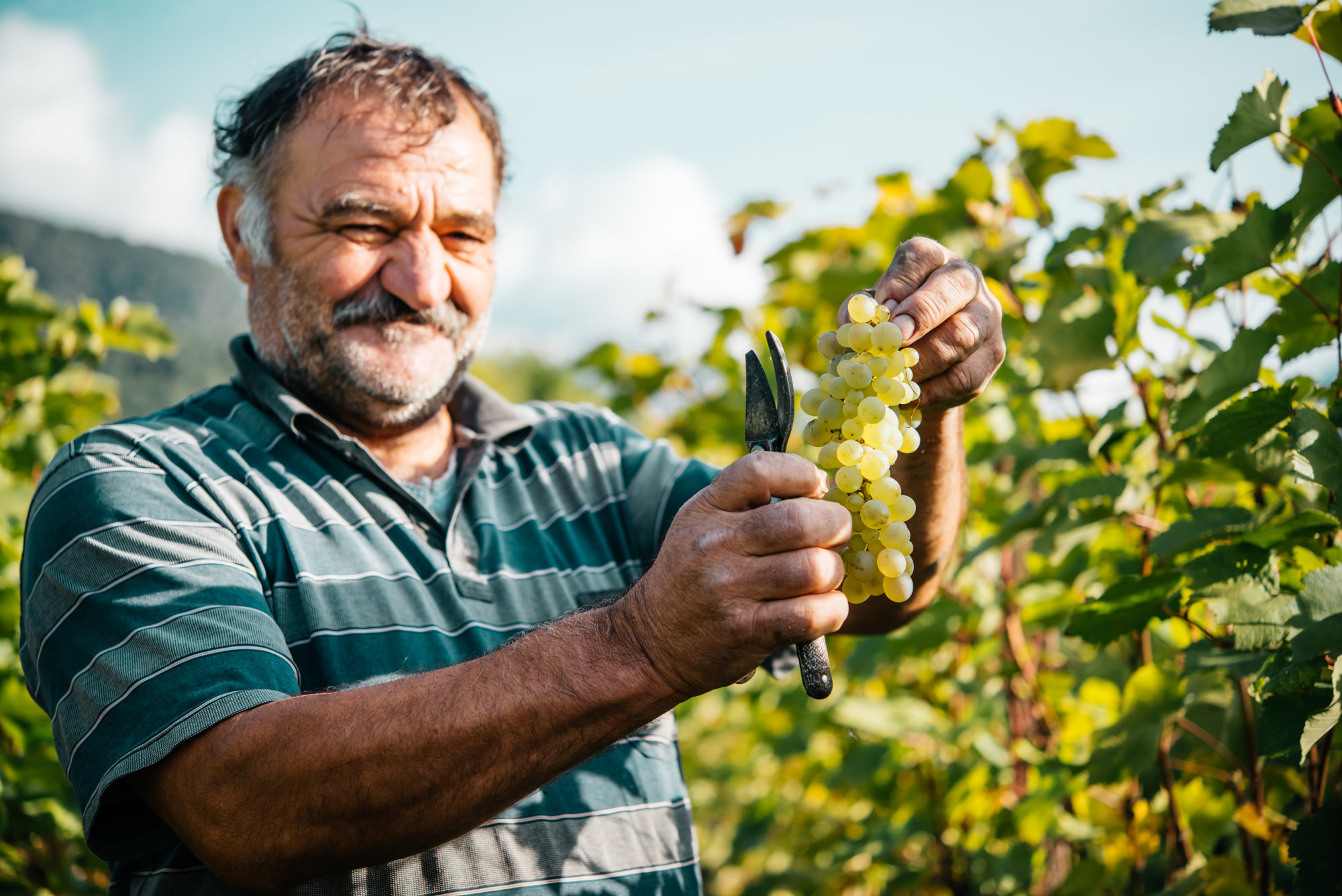 Wine comes from Georgia