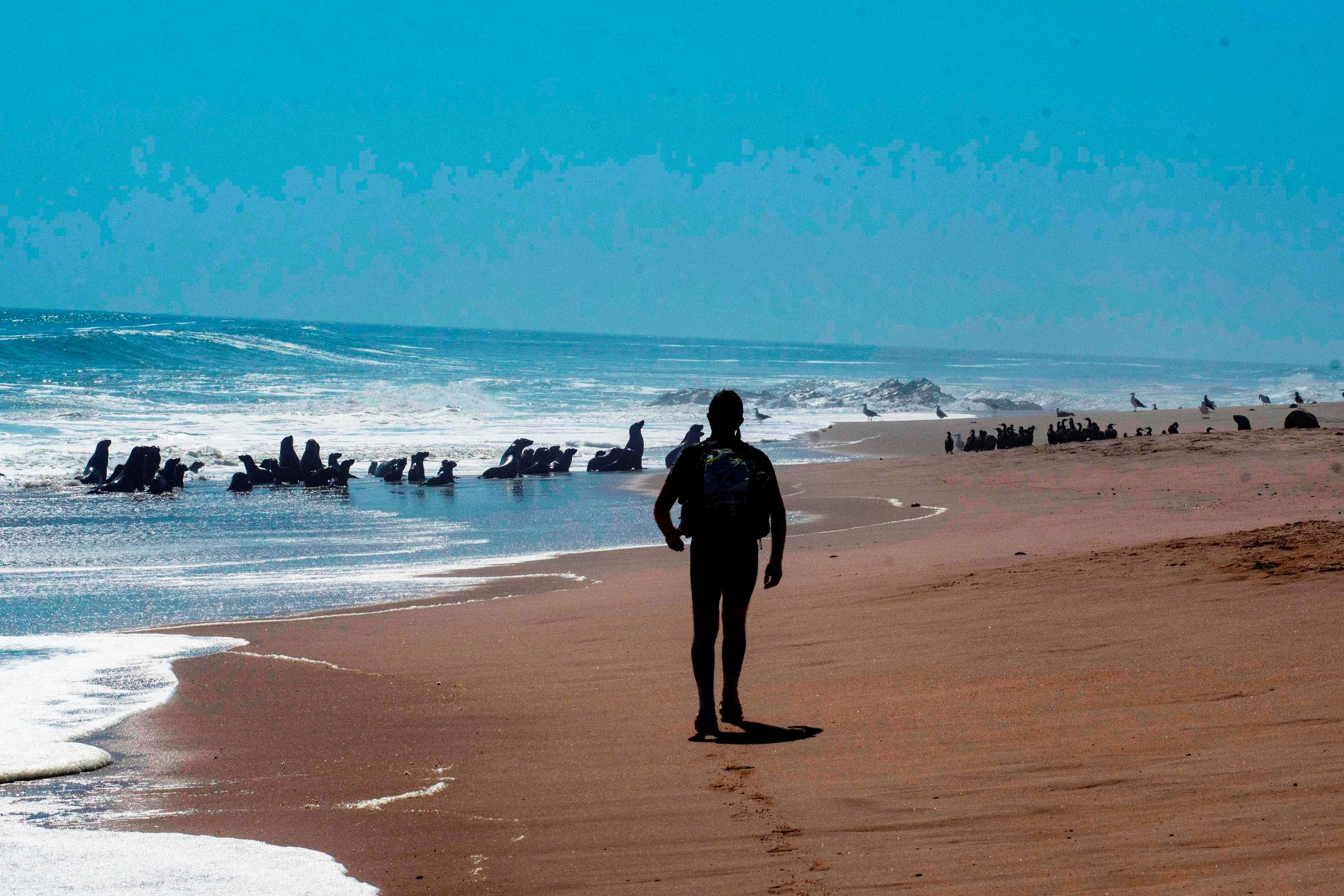 Skeleton Coast complete with seals