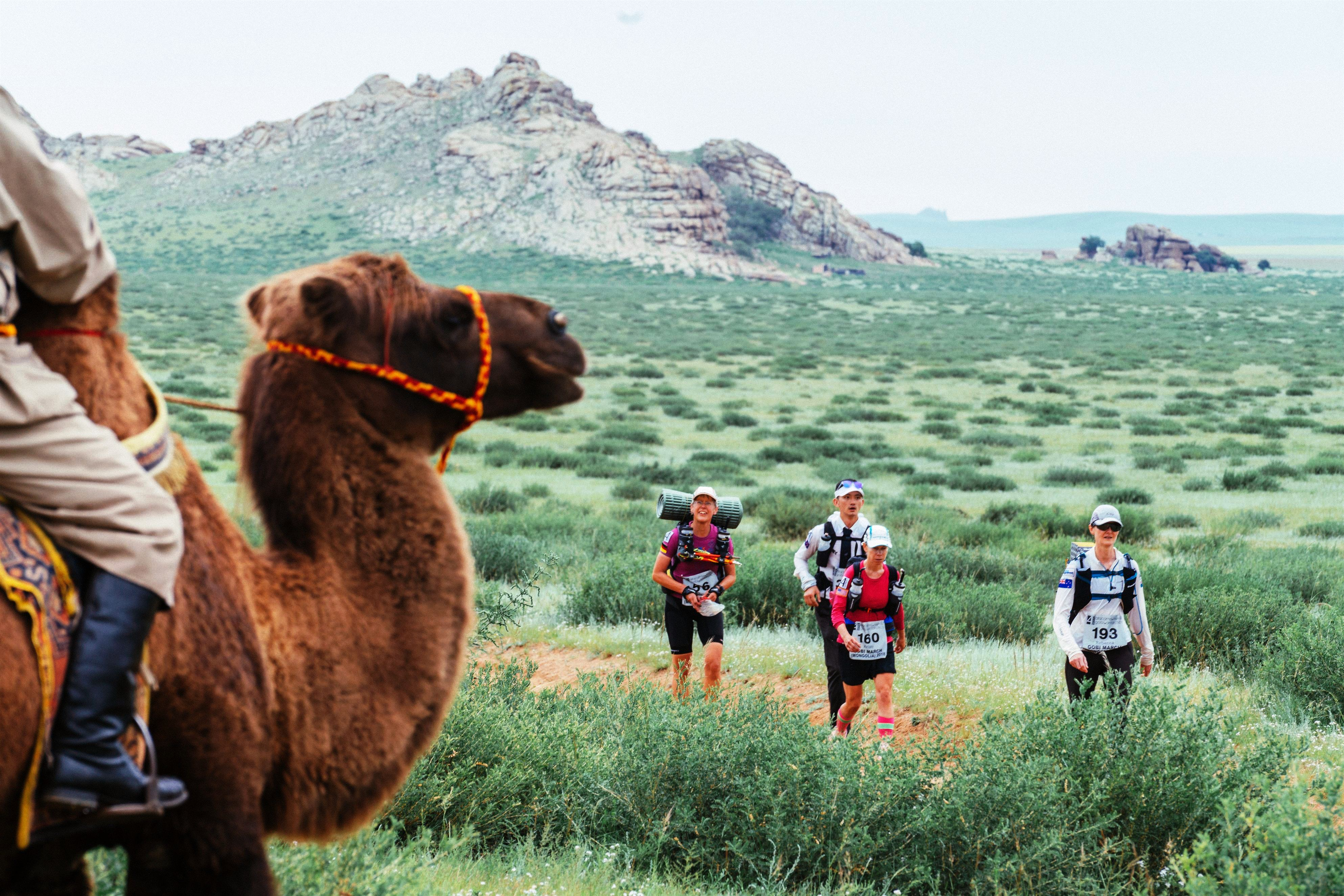 STAGE 3: Rebecca, Kristy, Olle and a Camel