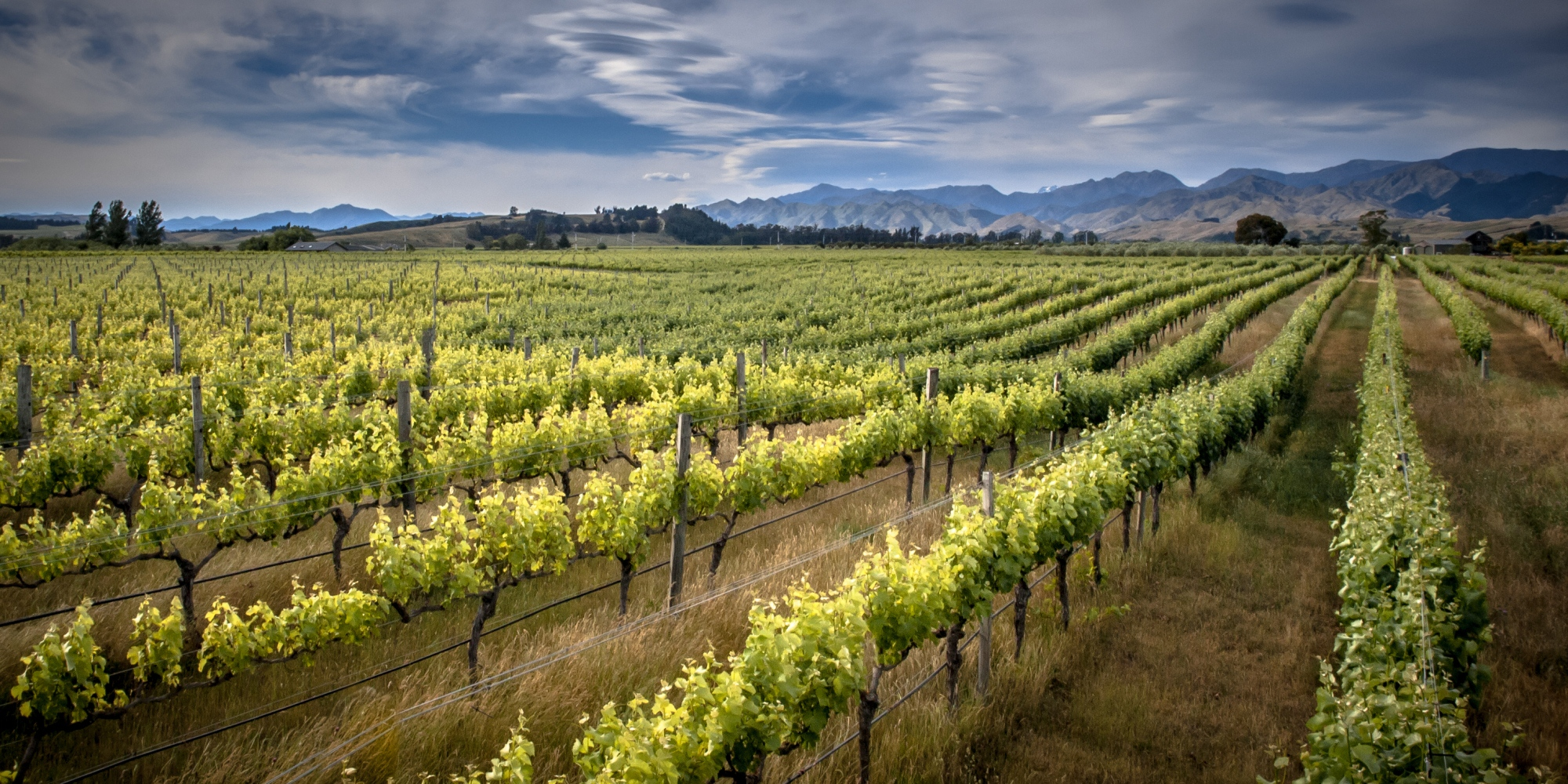 Some of the best vineyards in the world